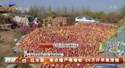 红寺堡:果农增产难增收 25万斤苹果滞销-191108