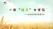 """一粒""""种子""""的情怀——记小麦育种专家裘志新"""