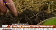 蚯蚓堆肥 熊蜂授粉 大武口区农业玩出新花样-191227