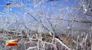 今天迎来入冬后的第三个节气——大雪-191207
