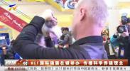 WCF国际猫展在银举办 传播科学养猫理念