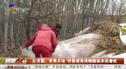 红寺堡:苹果丰收 村委成员找销路促农民增收-191206