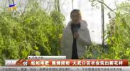 蚯蚓堆肥 熊蜂授粉 大武口区农业玩出新花样-200131