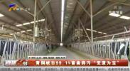 """青铜峡市99.1%畜禽粪污""""变废为宝""""-200131"""