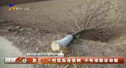 贺兰:一村民私自砍树 不听劝阻还动粗-200220