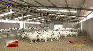 保供应 稳市场| 疫情当前 宁夏农产品储备充足供应有序-200208
