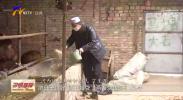 """丁生万:牛棚里""""走出""""的脱贫光荣户-200329"""