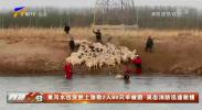 黄河水位突然上涨致2人80只羊被困 吴忠消防迅速救援-200326