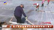 贺兰县供港蔬菜企业抢抓农时复工复产-200302