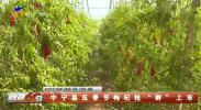 """中宁县反季节枸杞抢""""鲜""""上市-200324"""