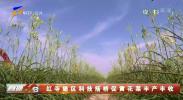 红寺堡区科技搭桥促黄花菜丰产丰收-200317