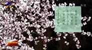 宁夏彭阳:万亩桃花迎春来-200321