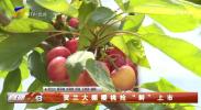 """贺兰大棚樱桃抢""""鲜""""上市-200317"""