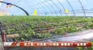 """贺兰县:村民家门口创业 桑葚成了""""金果果""""-200313"""