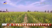 红寺堡区科技搭桥促黄花菜丰产丰收-200323