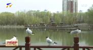 宁夏开展野生候鸟种群检测和传染病溯源工作-200326