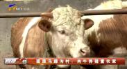 固原马蹄沟村:肉牛养殖富农家-200325