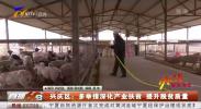 兴庆区:多举措深化产业扶贫 提升脱贫质量-200417