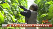 灵武:发展设施农业 打赢脱贫攻坚战-200416