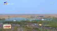 平罗庙庙湖:景区大门开 沙漠里桃花来-200406