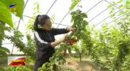 """银川:支农资金""""撬动""""农业高质量发展-200510"""