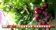 杞红菜黄葡萄紫 托起移民致富梦-200518