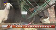 陶乐镇:产业扶贫托起移民致富梦-200529
