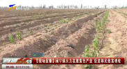 【现场直播】闽宁镇大力发展紫色产业 促进移民致富增收-200514