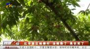 红寺堡区杨柳村:油桃熟了 果农笑了-200515