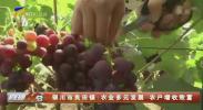 银川市良田镇:农业多元发展 农户增收致富-200513