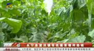 永宁县望洪镇有机蔬菜福州热销-200515