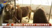 固原新堡村:种青贮忙养牛 农民日子有奔头-200515