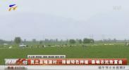 贺兰县隆源村:辣椒特色种植 奏响农民致富曲-200629