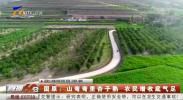 固原:山弯弯里杏子熟 农民增收底气足-200617