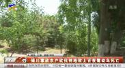 银川掌政农户砍伐林地致上百夜鹭幼鸟死亡-200620