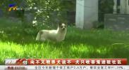 向不文明养犬说不 犬只收容笼进驻社区-200602