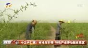 中卫兴仁镇:标准化引领 特色产业带动脱贫致富-200602