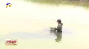 贺兰:耕田牧渔促增收-20200724
