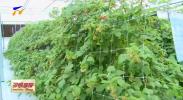 贺兰县:头茬红树莓喜丰收 拓宽村民致富路-20200728