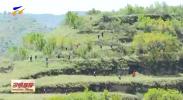 """彭阳:林下药材""""仿野生""""种植-20200828"""