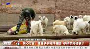 同心公安:摄像头安进羊围里 护好农民钱袋子-20200827