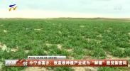 """中宁徐套乡:板蓝根种植产业成为""""解锁""""脱贫新密码-20200828"""