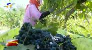 九大产业看发展|宁夏:放大优势 以贺兰山东麓独有风土筑造葡萄酒之都-20200924
