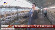 【现场直播】同心县南安村:产业振兴 蘑菇棚里托起致富梦-20200915