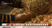 盐池县大坝村:黄花菜产业成就脱贫致富梦-20200916