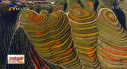建设黄河流域生态保护和高质量发展先行区丨西海固的新名片:从荒山秃岭到绿水青山-20200913