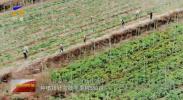我的脱贫故事|虎广红:壮大村集体就能更好地帮扶困难群众-20201014