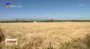 贺兰:水稻收割平稳收尾 全力抢收确保秋粮颗粒归仓-20201016