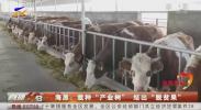 """海原:栽种""""产业树"""" 结出""""脱贫果""""-20201014"""