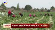 灵武市郝家桥镇大绿叶田园综合体萝卜喜获丰收-20201017